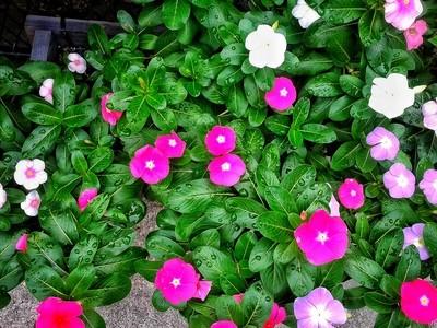 Dewey leaves and flowers