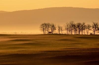 Foggy morning farm