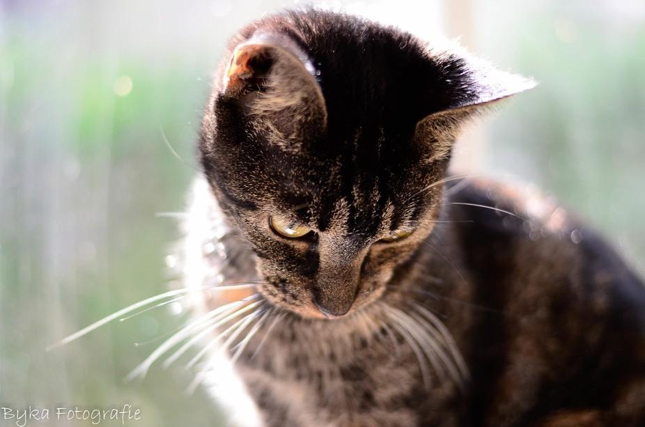 Photo of my lovely shy cat.