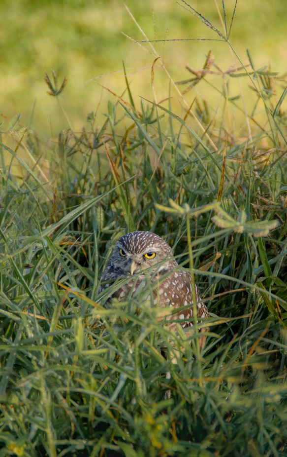 Waiting In The Weeds by Zulkowsky - Can You See Me Photo Contest