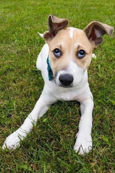Puppy Dog Face