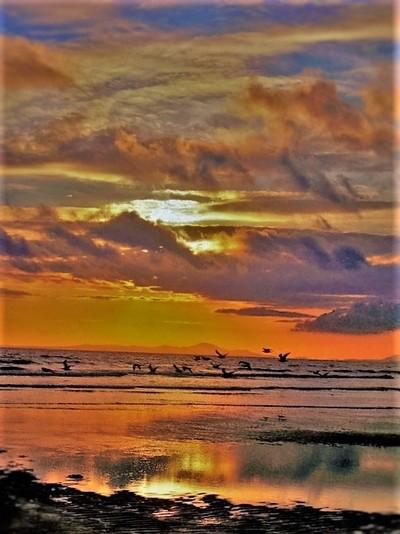 Sun Set Bird Paradise, In Wales.