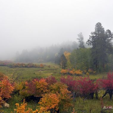 Foggy fall colors in the Wyoming Black Hills