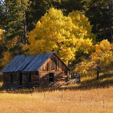 Old Cabin in Black Hills of Wyoming with fall colors.