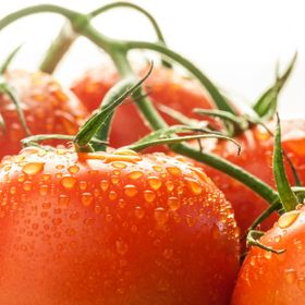 Red tomatoes with water droplets