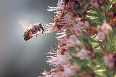 Bee backlit