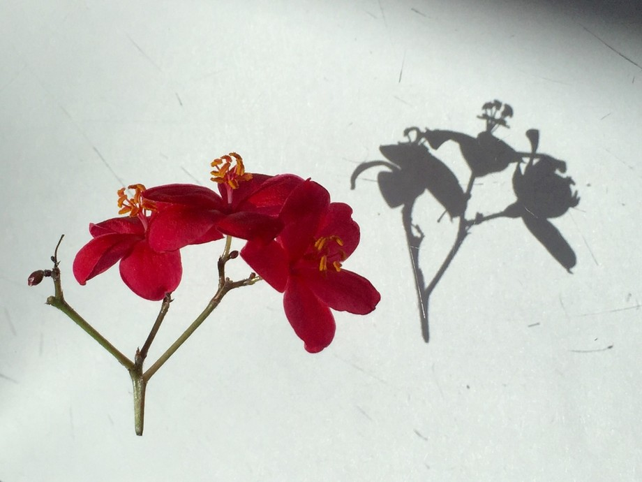 I did some experiments with these flowers. It's a very tiny kind of flower with a beauti...