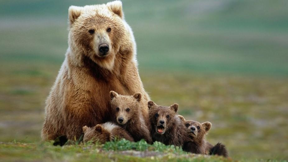 a Bear with 4 Little Bears