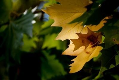 La luz y el otoño. Caravaca de la Cruz