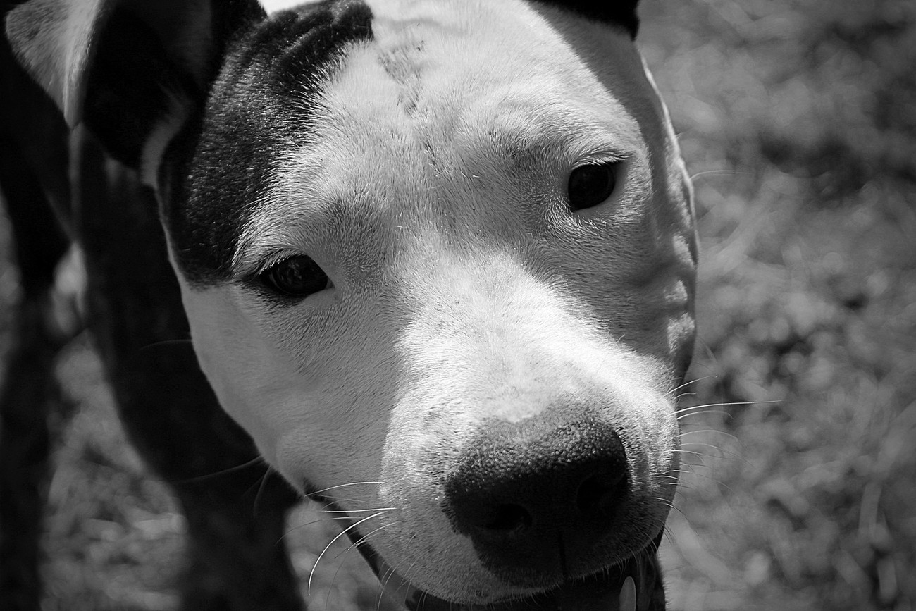 Pretty 'little' Delilah! She's just a massive bundle of love and cuddles.
