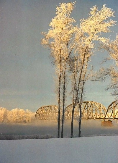 Frost trees
