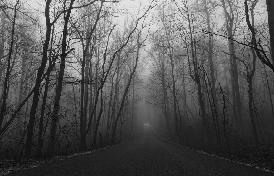 Foggy morning in the Smoky Mountain National Park