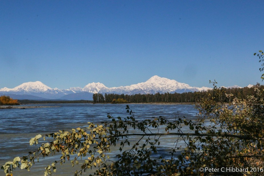 Very few people see all of Denali, The High One, but the sky was perfect on this day. This photo ...