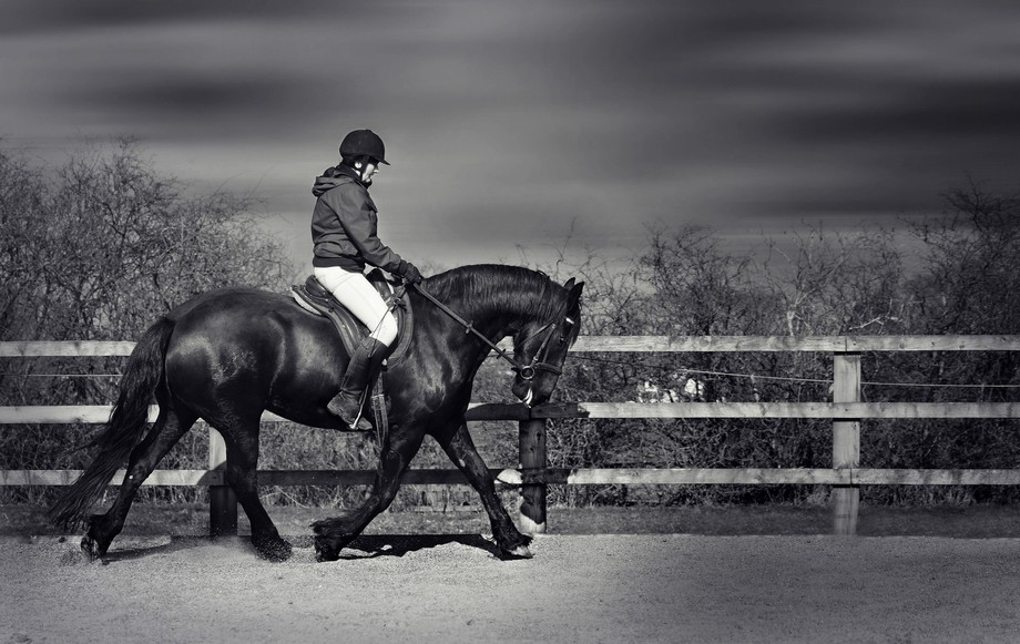 This is Petra a classically trained Friesian...