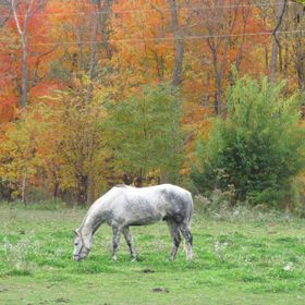 My horse frame by fall colors