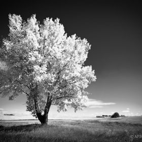 There's just something about a lone tree....and especially one in the fall.