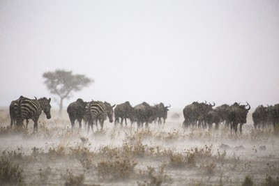 Storm in the Mara