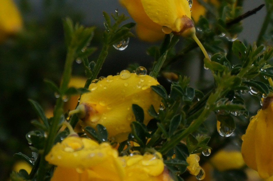 I love roses and water