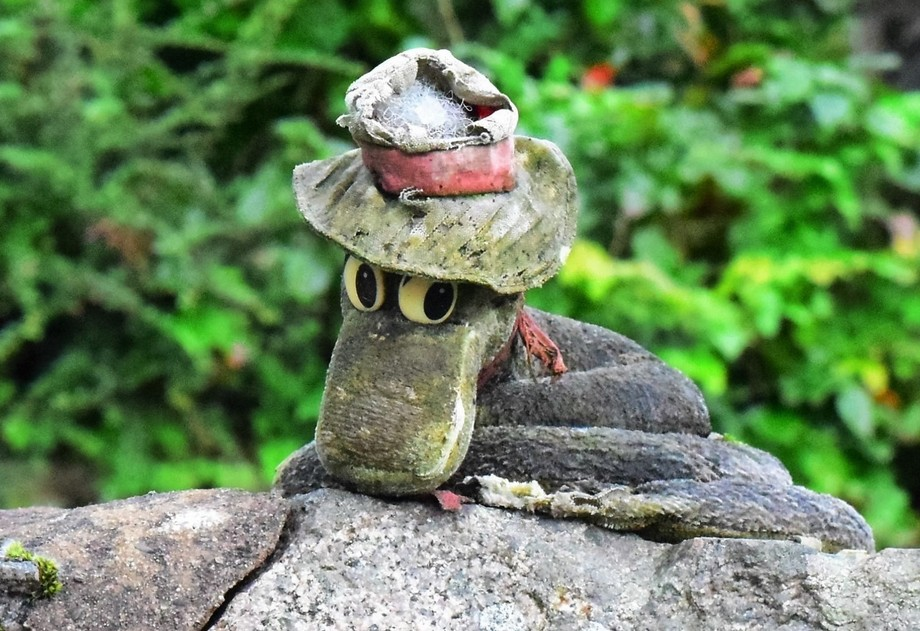 On a walk to the white shell beach at Kippford, I spotted this fellow, sat on top of a wall, and had to take his picture.