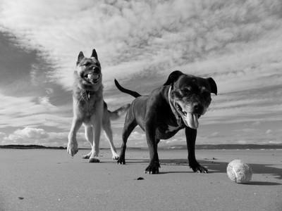 My Beach Bums  P1200975 (1024x768)