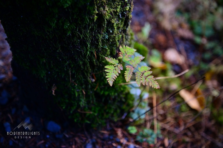 Its amazing what you will see if you look for the simple things in life. Hiking at Winner Creek T...
