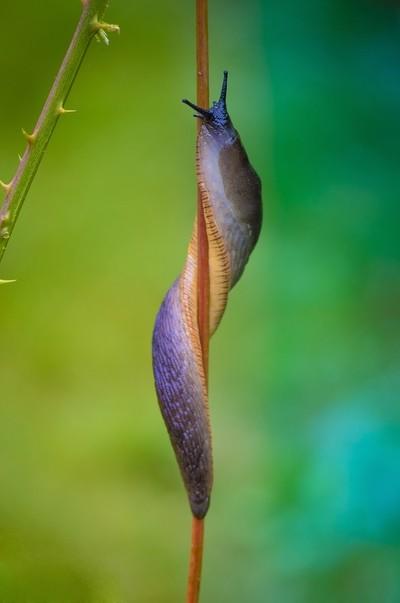 Slug Circus