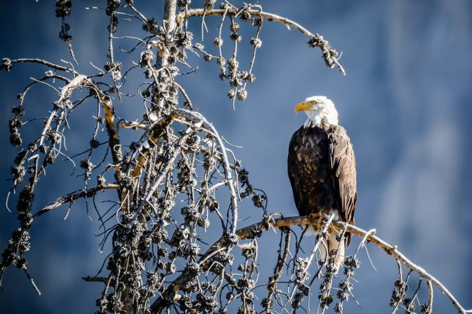 Eagle's Roost by SRunningM - Isolated Photo Contest