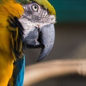 Amazing colorful blue & yellow Macaw