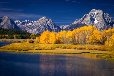 Glowing Aspens Crown the Grand Tetons