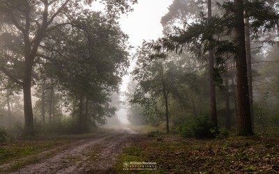 Forest Path Into The Mist
