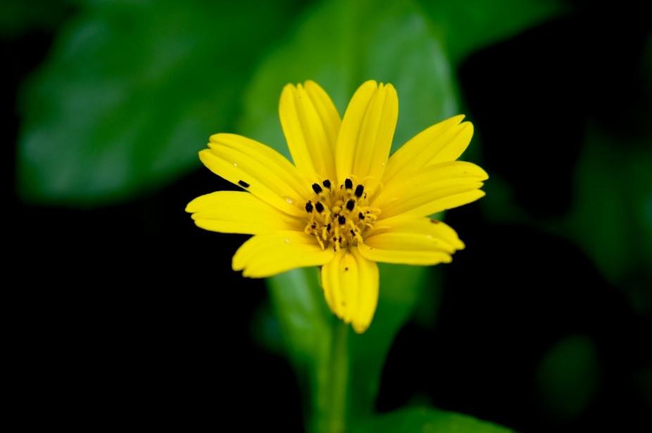 Black dot in yellow flower