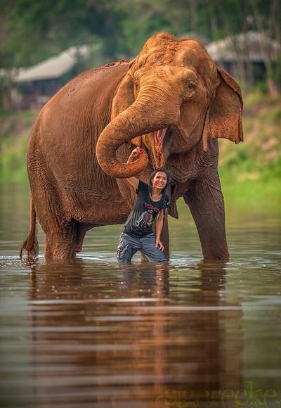 Lek Chailert - Elephant Nature Park