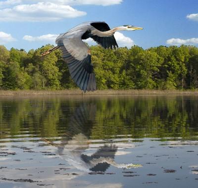 Reflected Flight