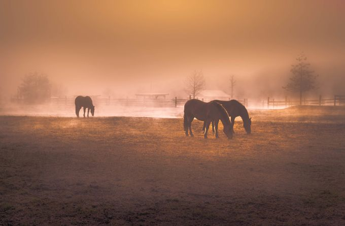 HORSE GRAZING by raulweisser - Farms And Barns Animals Photo Contest