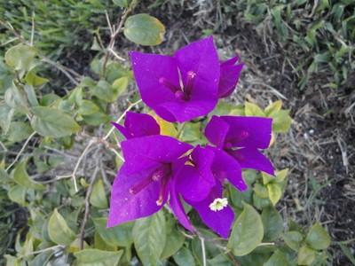 Florida Flower 2011 June 014