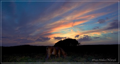 Grazing into the sunset