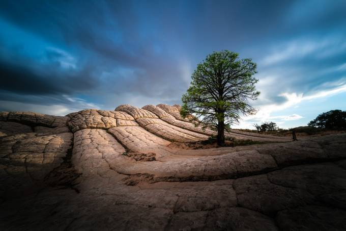 The Lone Tree by larrymarshall - A Lonely Tree Photo Contest