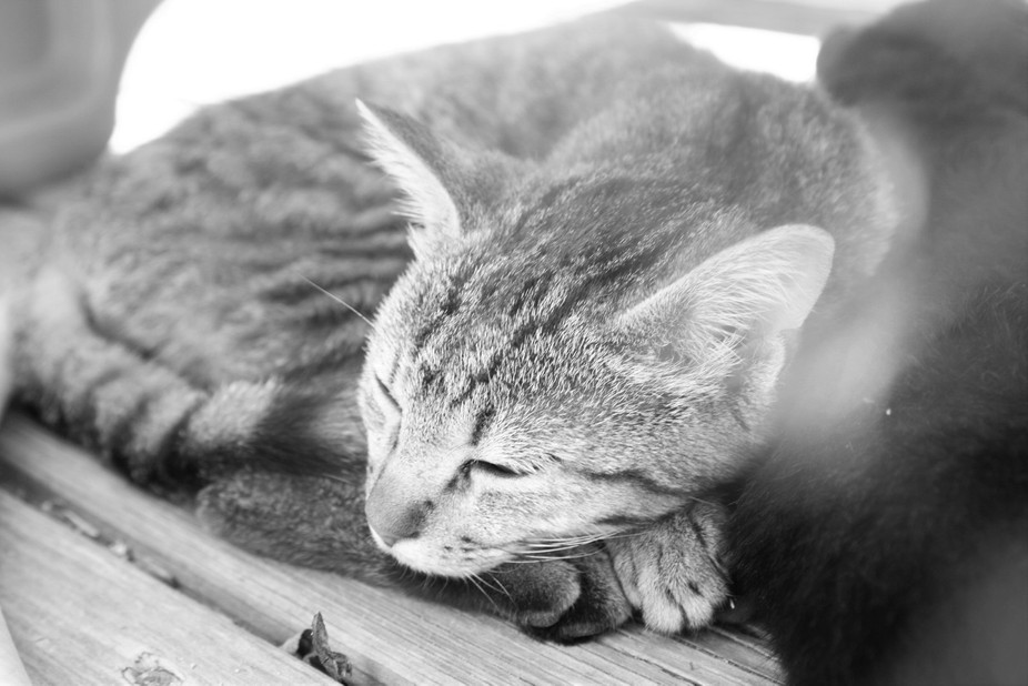 I love this photo becauser most of my photos i have to rush to take or the cat leaves but sence t...