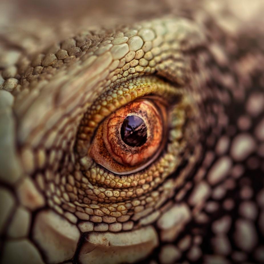 The Animal Eye Photo Contest Winner Blog ViewBugcom - 24 detailed close ups of animal eyes