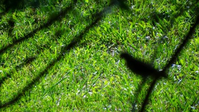 Shadow - bird in the bush