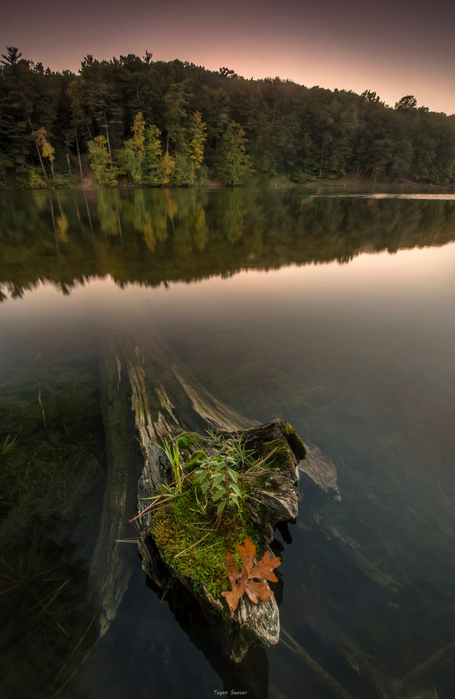 Clear Lake, WI by teganseever - Fallen Trees Photo Contest