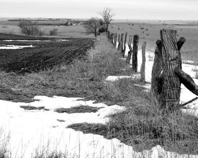Fence Row Landscape JPG