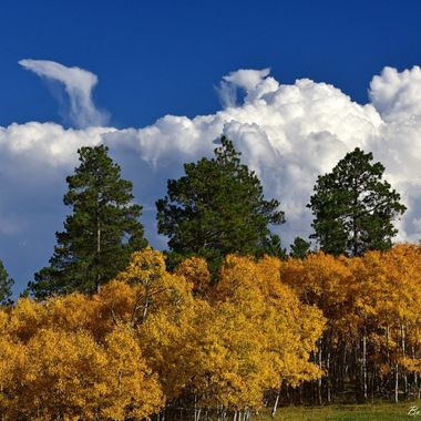 Fall color and clouds in the Bear Lodge mountains in Northeast Wyoming.