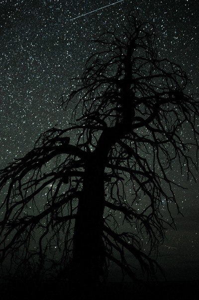 Silhouetted tree, Bryce Canyon, USA