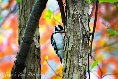 Bird in Fall