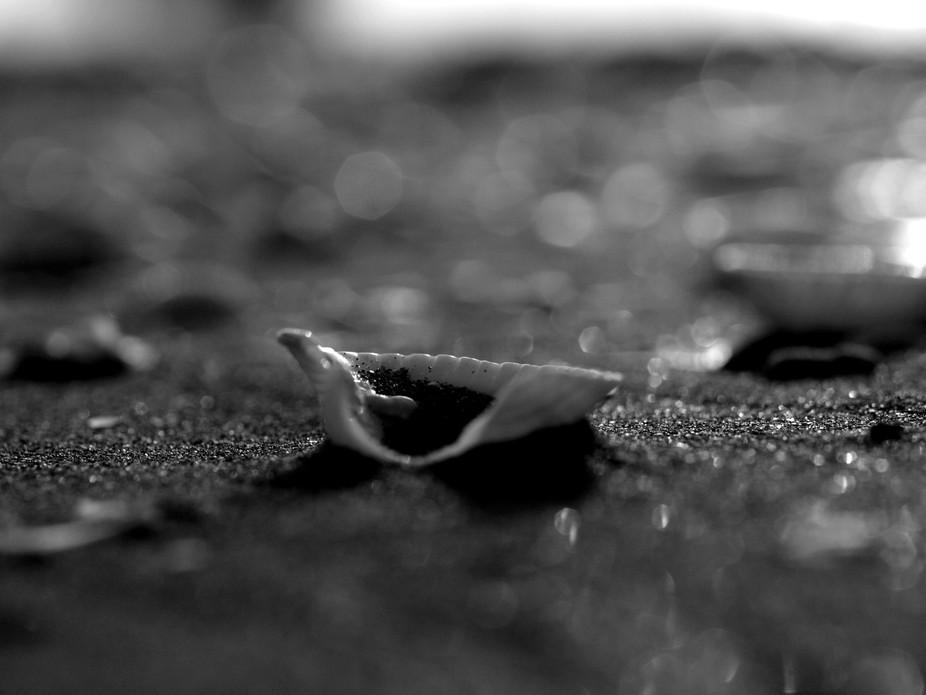 sesaat aku memikirkan makna cangkang kerang itu...dan terlintas di benak ku...seperti sebuah Muti...