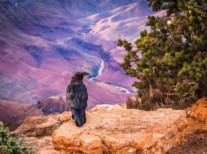 Grand Canyon 2015 by shlava09 - High Vantage Points Photo Contest
