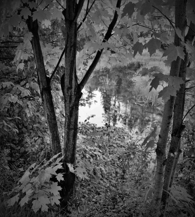 automne treeNB