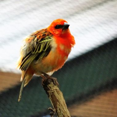 Beautiful colourful birds so eye catching well worth a Patient long visit in The Tropical Realm at Chester Zoo