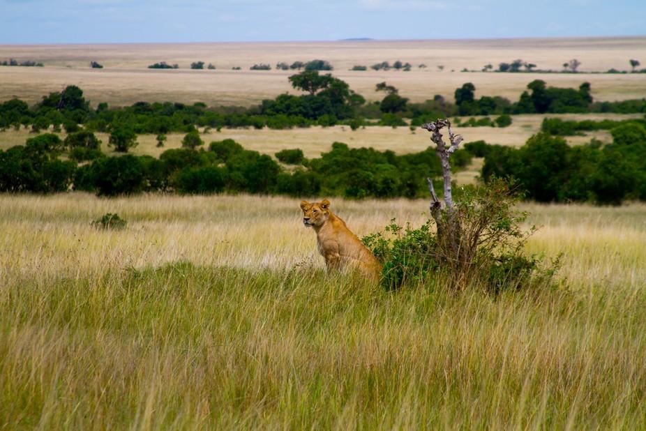 From my trip to the Masai Mara in Kenya.